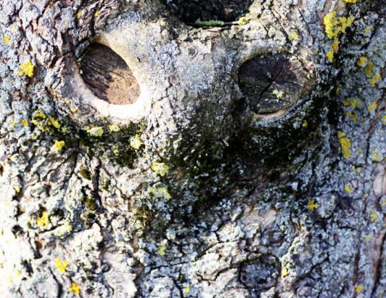 20150419_angry_tree.jpg