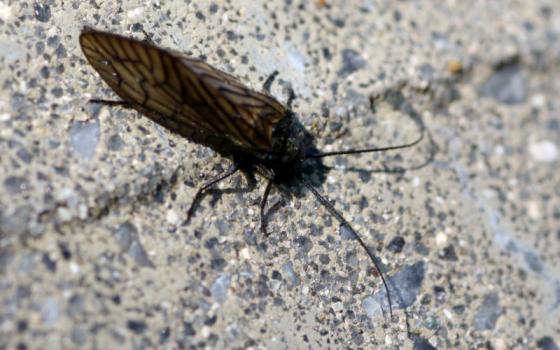 20150419_insekt.jpg