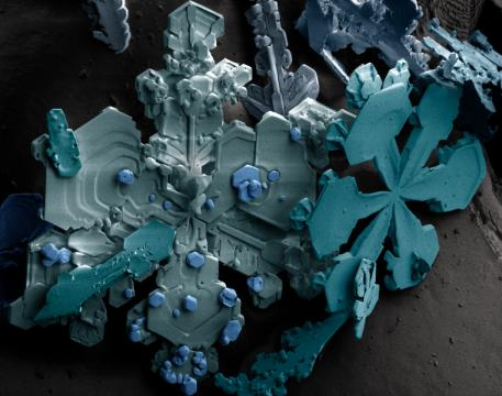 763px-snow_crystals.png