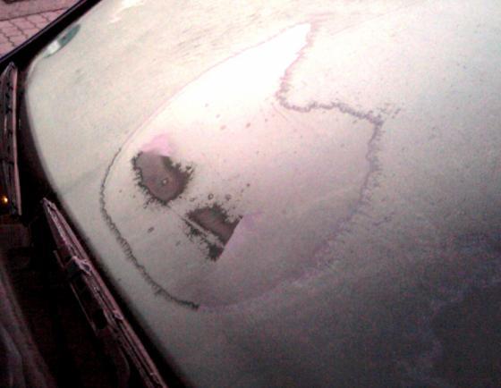 angry_kitty.jpg