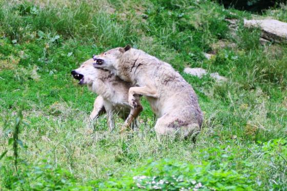 mgh_wolfsruege.jpg