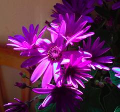 miese_pflanze.jpg
