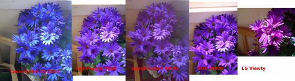 miese_pflanze_vergleich.jpg