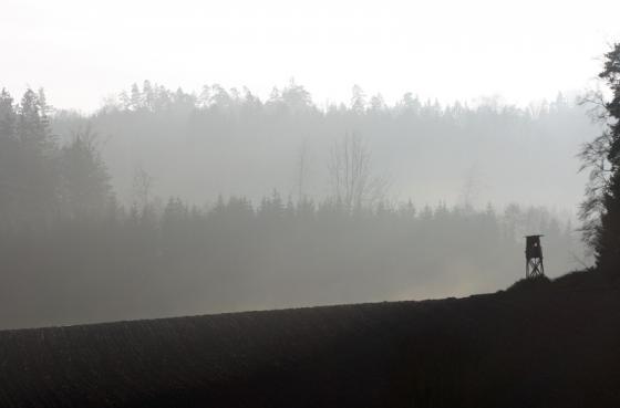 nebelwald_20140112.jpg