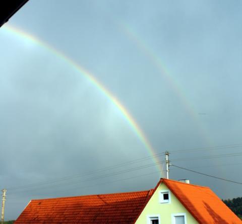 waldtann_regenboegen.jpg