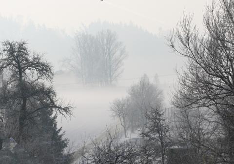 waldtanner_winterdunst.jpg